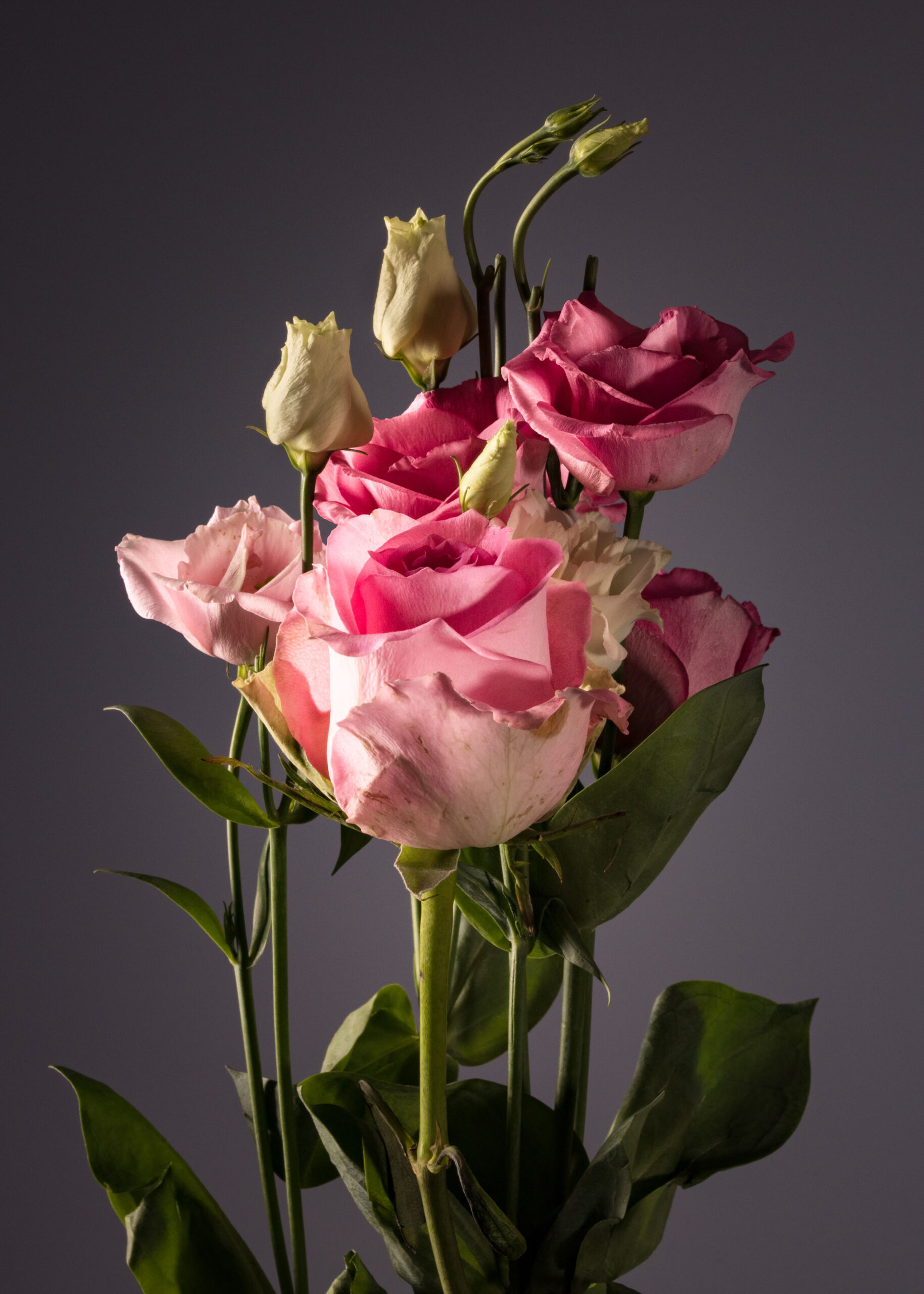 """""""Ein Bund Rosen"""""""